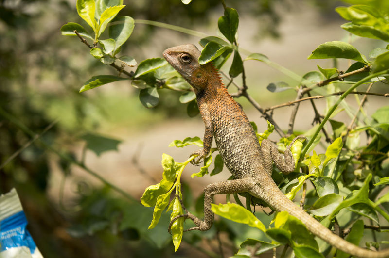 View of a lizard on branch
