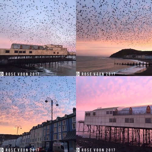 Sunrise and Starlings at Aberystwyth Royal Pier Aberystwyth Dramatic Sky Beauty In Nature Starlings Ceredigion Wales Reflections Murmuration Of Starlings Sky