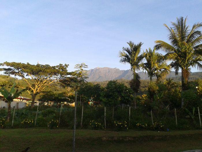 Beautiful Nature Eyeem Natur Lover Nature's Takeover Enjoying Life Mount Kinabalu ?