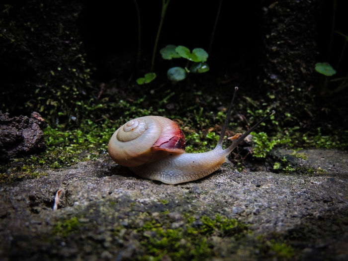 Have a wonderful Sunday!! Animal Themes Close-up EyeEm Nature Lover Fragility Gastropod Nature Night No People One Animal Outdoors Slimy Snail カタツムリ