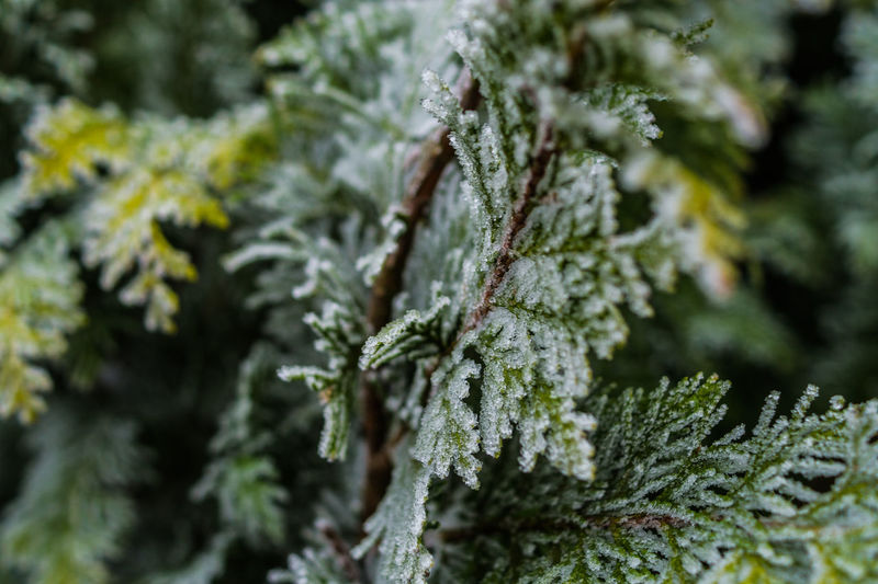 Close-up of frozen branches