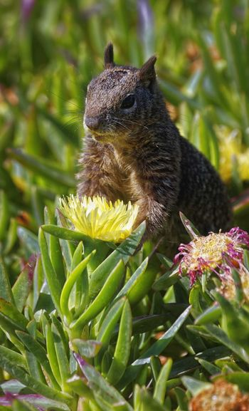 Perspectives On Nature Flower One Animal Animal Wildlife Animals In The Wild Nature Plant Green Color No People Day Animal Themes Beauty In Nature Close-up Outdoors Squirrel Squirrel Closeup Squirrel Photo Squirrel Photography Yellow Yellow Flower