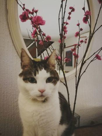 Mabel. Cat HuaweiP9