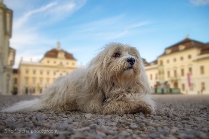 One Animal Dog Pets Animal Themes Focus On Foreground Domestic Animals Architecture Building Exterior No People City Outdoors Sky Pet Clothing Mammal