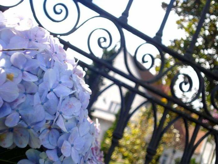 Flowers Gates Garden House Out In Front Of House Garden Photography Outside House At The Gate By The Garden Flores Casa Portão Jardim Frente De Casa Vista Da Casa