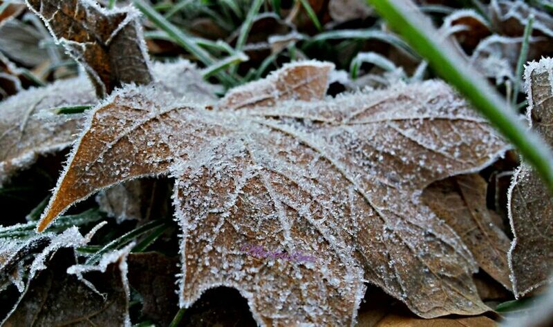 Frosty Memory Taking Photos Fotodroiding Photo Andrography Photography Outdoors Droidography Frost Fotodroids Android Phoneography Andrographer Droidographer Nature