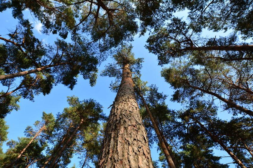 Tree Tree Trunk Forest Branch Tree Area Blue Clear Sky Sky