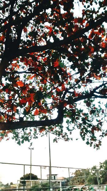 Cidademaravilhosa Rio De Janeiro, Brazil Hello World Word Art Nature Photography Naturelovers Nature_perfection Natureza Nature Beauty Relaxing Flowers, Nature And Beauty Amazing Nature Brazil ❤ Future Photographer Riodejaneiro Free Time