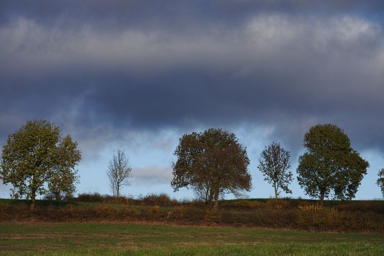 LAYERS OF NATURE! Fall Tree Storm Cloud Rural Scene Tree Area