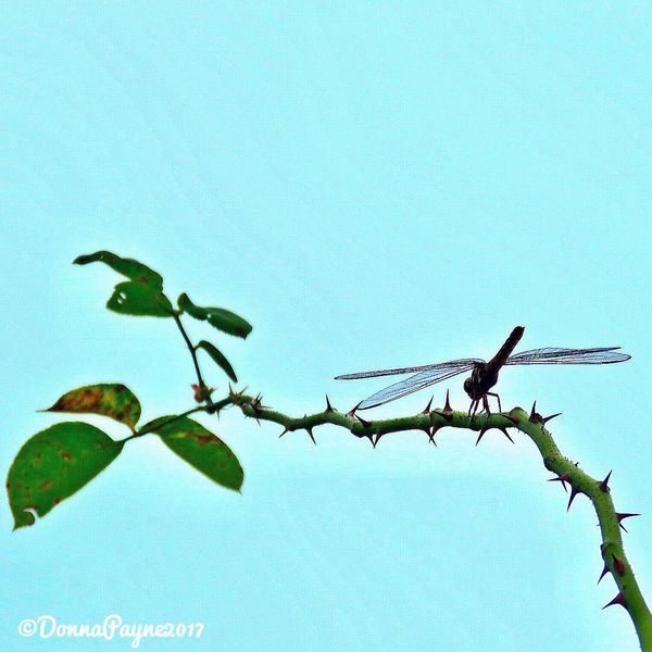Dragon Fly Low Angle View Animals In The Wild Animal Themes Clear Sky Bird Nature Day No People Perching Animal Wildlife Outdoors Blue Beauty In Nature Flower Sky Close-up