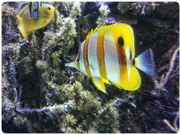 Yellow Underwater Water Sea Life No People Swimming Animal Themes Multi Colored Sea Day Aquarium Acquario Di Genova Smartphone Photography Note 2 Fish Tank Through The Window Fishes