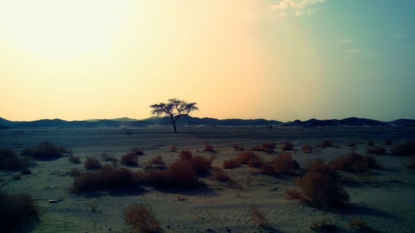43 Golden Moments Sand Tree Desert Sky Trees Sahara Desert Sandy Lands Travel Sun Rural Exploration Egypt Nature On The Way Fine Art Photography Showcase July