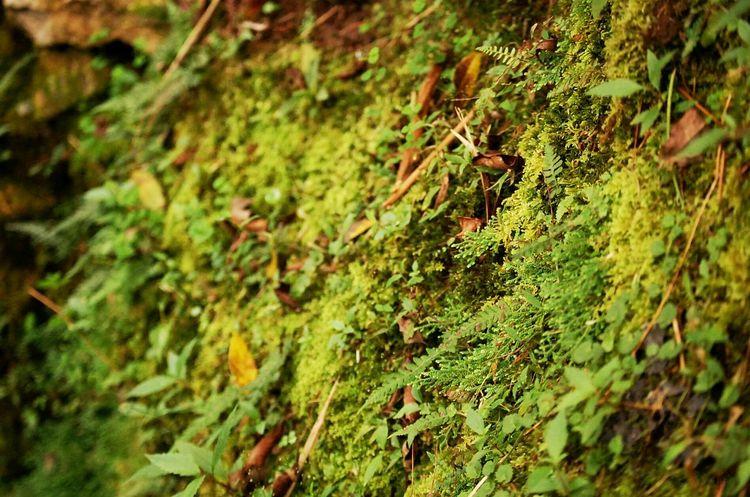 Green. Little plants of nature. Eeyemphilippines Nature Forest Green Grass