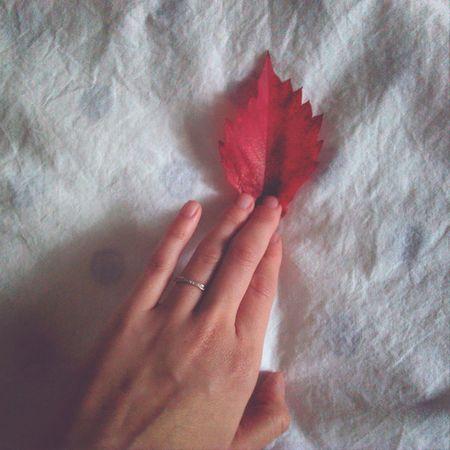Я пришла домой с продуктами, еще одним пакетом и этим красным маленьким другом. машалайф листик Red August