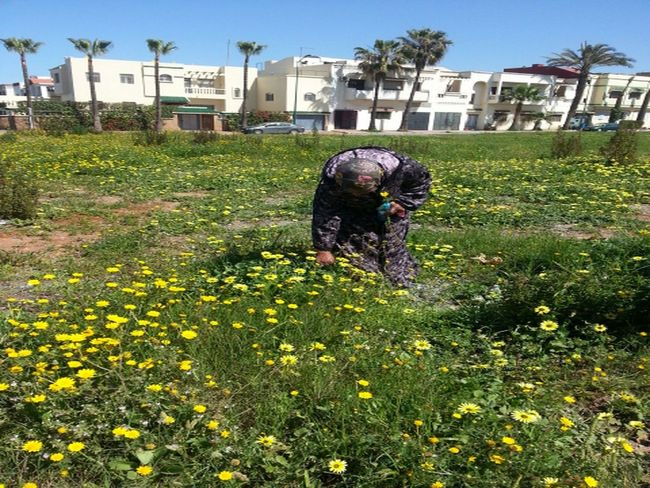 jardin el manzah Building Exterior Fleurs Du Jardin Jardin Morocco Nature Rabat Real People Rose - Flower