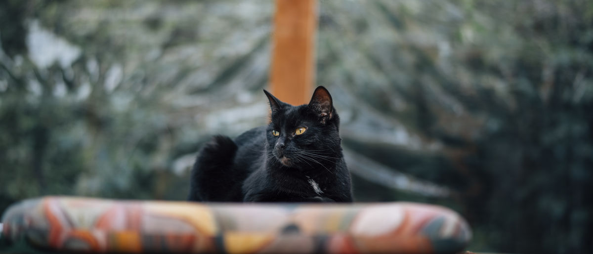 The cat lying on the table. Black Cat Netherlands Relaxing Animal Black Color Bokeh Cat Cat Head Close-up Day Detailed Domestic Domestic Cat Feline Large Looking Away From Camera Mammal No People One Animal Outside Pets Portrait Relax Selective Focus Wide