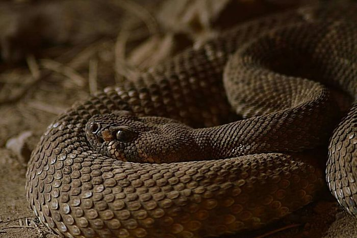 Schlange  Reptilien Nature Photography Snake Snake First Eyeem Photo