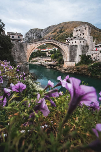 View of flowering plants and bridge over river