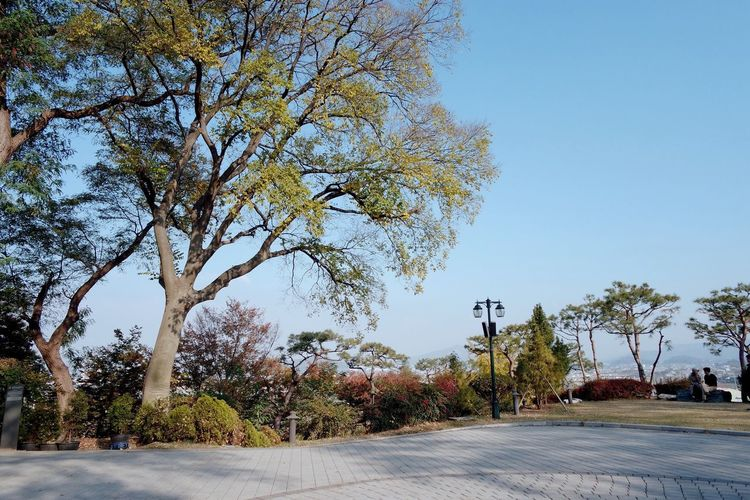 Tree Road Outdoors Day Street Clear Sky No People Tranquil Scene Nature Beauty In Nature Tranquility Sky Scenics Autumn Growth Building Exterior City 성당 공세리 성당 아산 Nature Korea Clear Sky Be. Ready. EyeEmNewHere