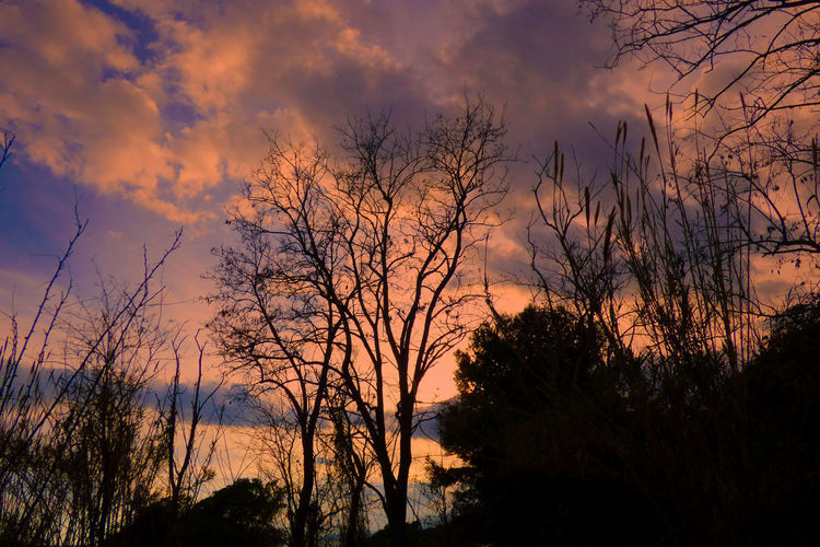 Bare Tree Beauty In Nature Cloud - Sky Idyllic Nature No People Non-urban Scene Orange Color Outdoors Plant Scenics - Nature Silhouette Sky Sunset Tranquil Scene Tranquility Tree