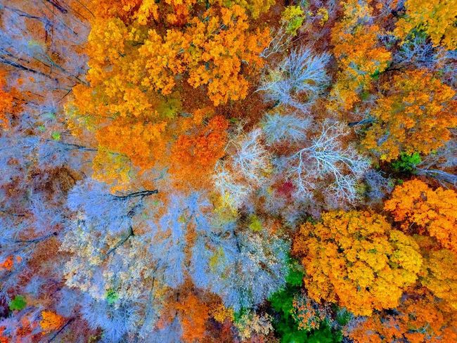 Autumn Backgrounds Beauty In Nature Change Close-up Day Full Frame Growth Leaf Multi Colored Nature No People Orange Color Outdoors Tree Yellow