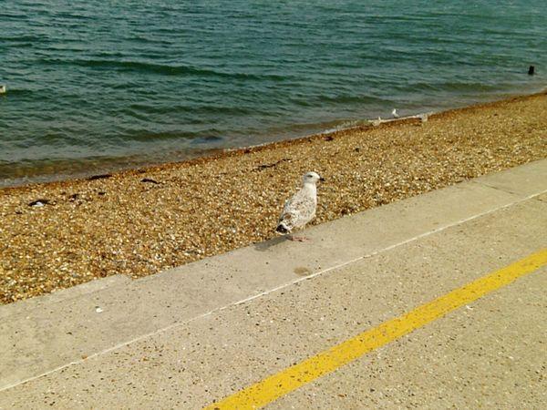 Seagull Seagulls Sea HerneBay Kent Uk Animals Birds Bird Photography