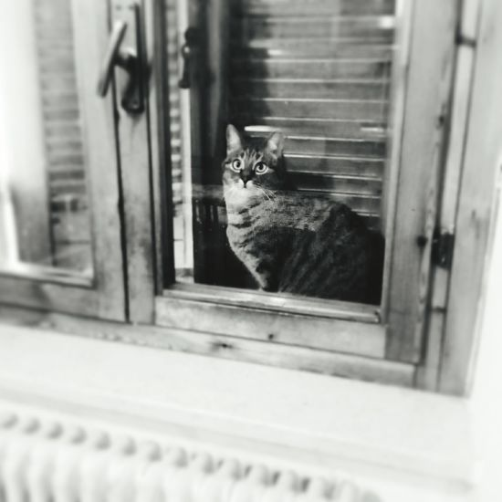 Tuttuno 😁 #cat #gatos #gatti#chats#cats #felini #blancoynegro  #bianconero #blackandwhite Domestic Cat Window Pets Feline Domestic Animals Sitting One Animal