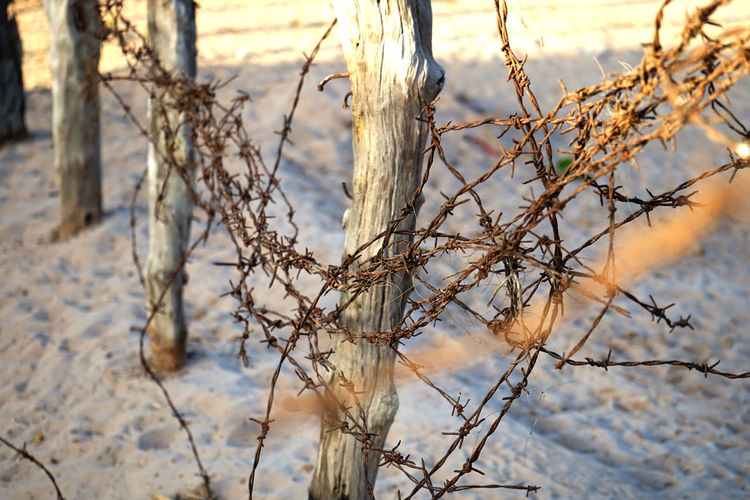 Close-up of dry plant on snow covered land
