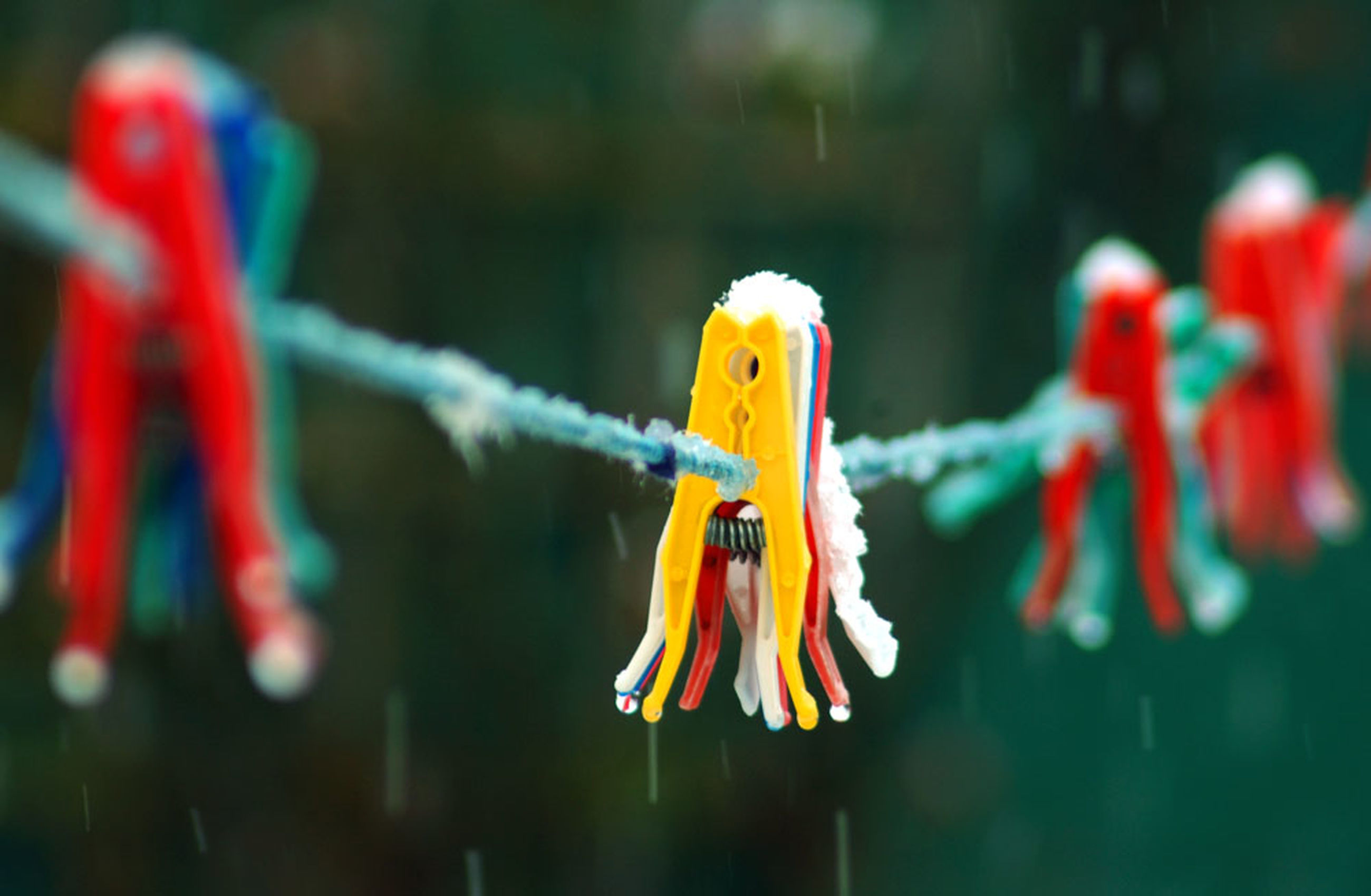 focus on foreground, animal, no people, close-up, animal themes, fish, yellow, hanging, vertebrate, rope, nature, multi colored, representation, selective focus, animal representation, clothesline, clothespin, day, in a row, underwater