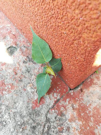 tree Leaf High