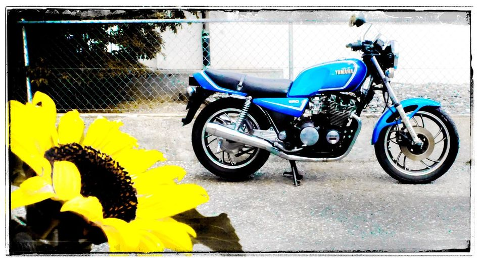 Big Eye Judy (Yamaha XJ650) Kardan Flower Yellow Sunflower Blue 1982 Bike Old Bike Töff Motorrad Xj6 Xj650 Yamaha Transportation Mode Of Transportation Land Vehicle City Transfer Print Day Street Motorcycle Side View Stationary