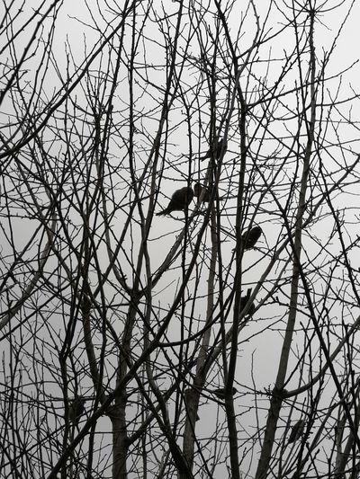 Morninng Sparrow Birds Flock