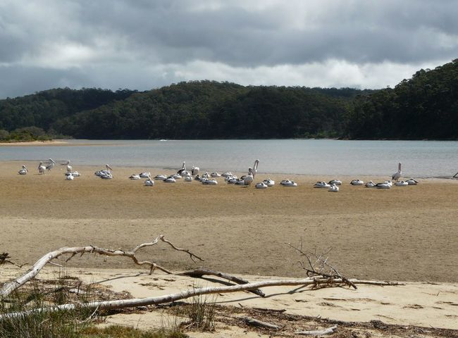 Australian Landscape Beauty In Nature Birds Day Mogareeka Nature No People Outdoors Pelicans Sea And Sky Sea Birds Tathra The Great Outdoors - 2016 EyeEm Awards