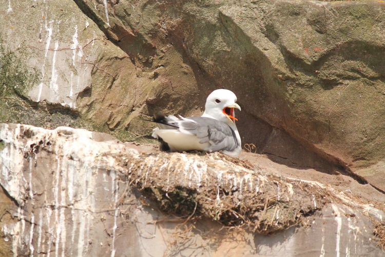 Low angle view of seagull on rock formation