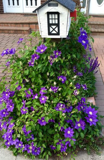 Wrapped Mailbox Flowers,nature,purplegarden,decoration