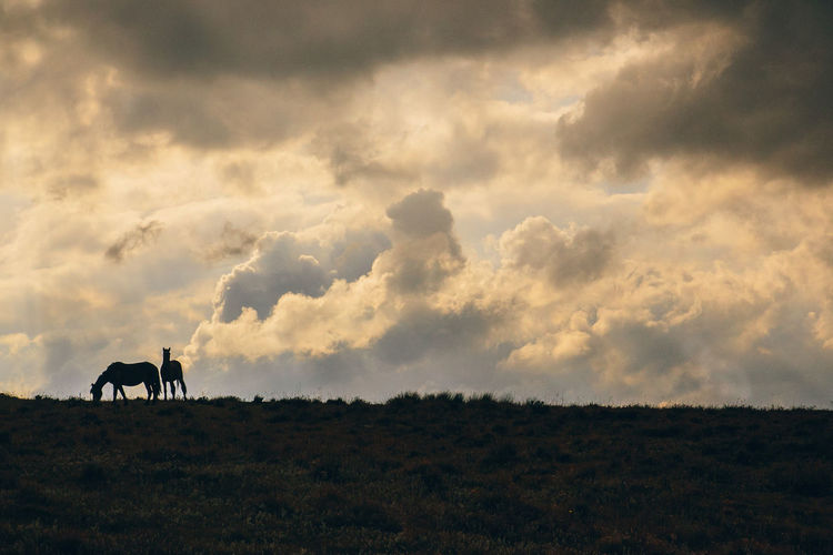 Horses on field against cloudy sky
