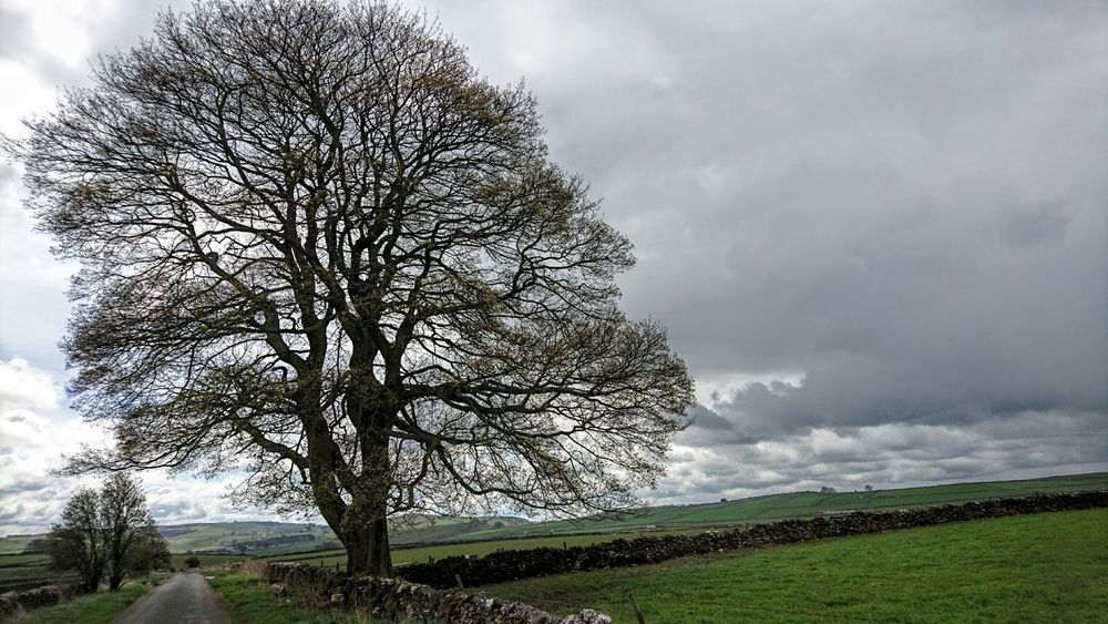 Rural Scene Nature On Your Doorstep Natural Beauty Trees Stone Wall Clouds And Sky Storm Clouds Weather Photography Countryside Country Life Taking Photos Check This Out Hello World The Derbyshire dales.