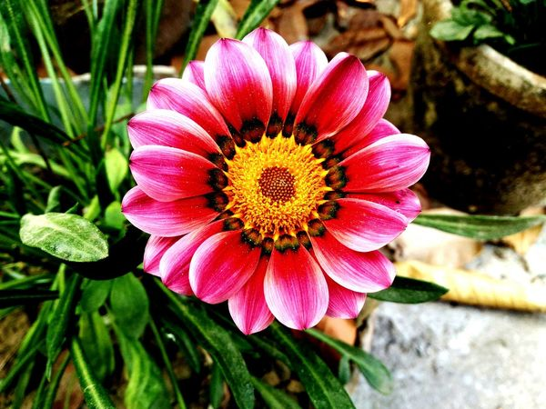 Flower Beauty In Nature Blooming