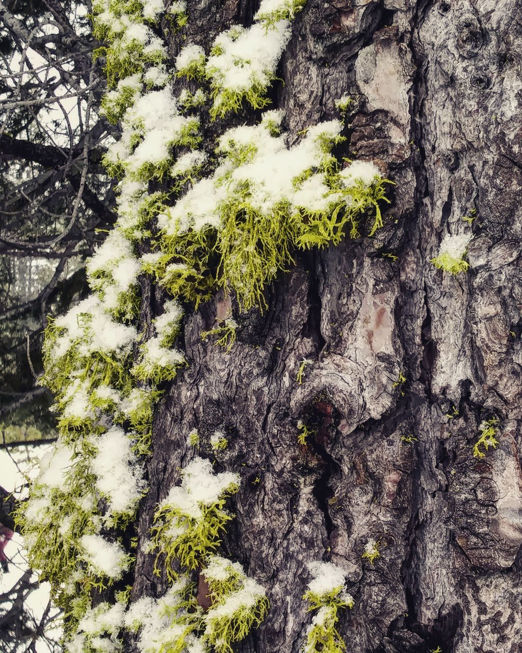 tree trunk, tree, growth, nature, bark, day, no people, textured, plant, beauty in nature, close-up, outdoors, lichen, fragility