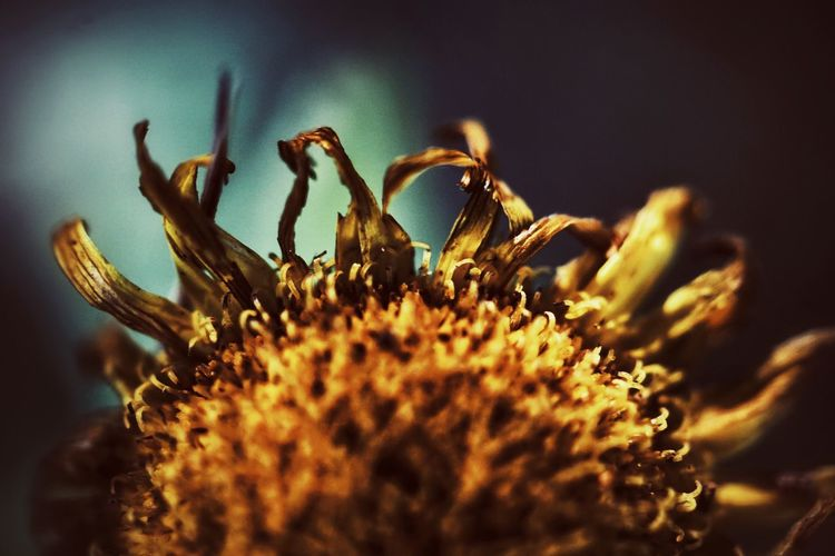 Beautiful Nature Nature Beauty In Nature Nature_collection Flower Plant Petals Yellow Yellow Flower Freshness Smell Close-up Macro Bokeh Minimalism Abstract Fragility Nature Beauty In Nature No People Flower Head Plant Growth Petal Outdoors Animal Themes Day