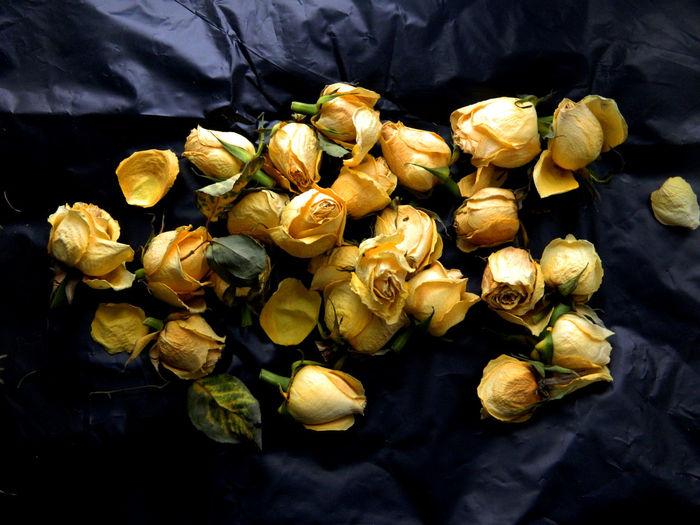 Black Background Butiful Butiful Flower Flower Rose🌹 жёлтые розы