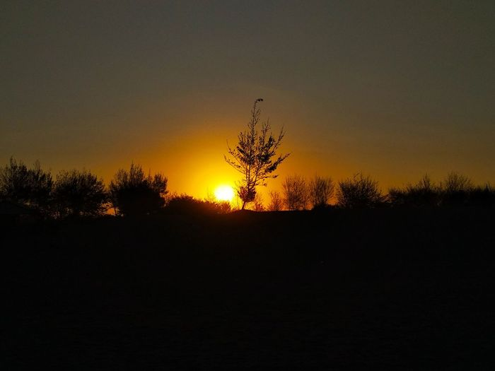 waiting for sunset Beauty In Nature Beautiful Beautiful Nature Nature Orange Sky Sand Beach Beachphotography Photography Backlight Nature Outdoors Plant Bird Tree Flying Bird Of Prey Sunset Silhouette Mid-air Animal Themes Single Tree Treetop Tree Area Moonlight Pine Woodland Solar Eclipse