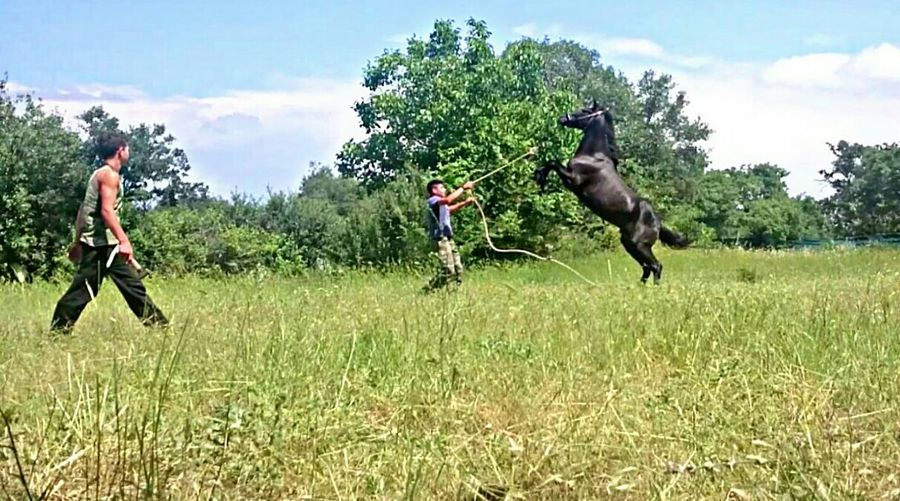 Horses Good Vibes Training Day Wild Nature Summer Blue Sky Black Horse