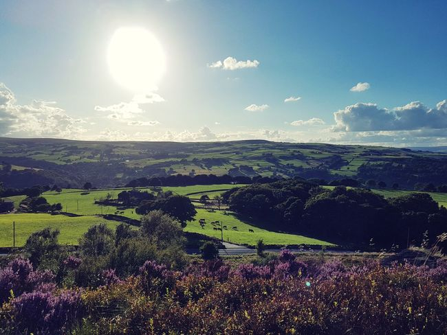 Agriculture Hill Landscape Nature Beauty In Nature Sun No People Rural Scene Scenics Sky Outdoors Day Freshness Calderdale Yorkshire Glare Dazzle Cloud - Sky Heather Moors Beauty Freshness Magical The Week On EyeEm Your Ticket To Europe