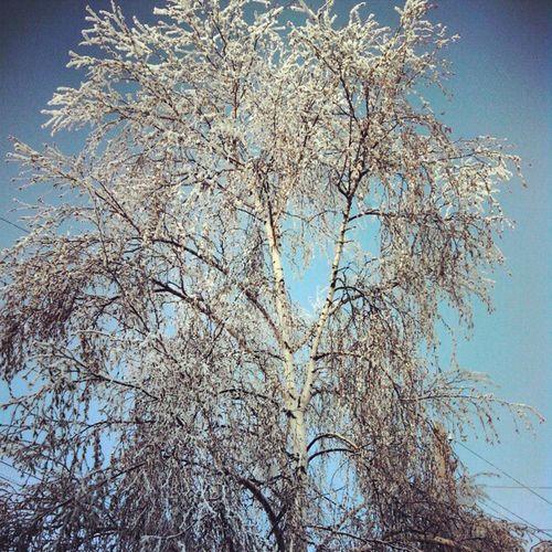 Snow Siberia Yakutsk Ykt14