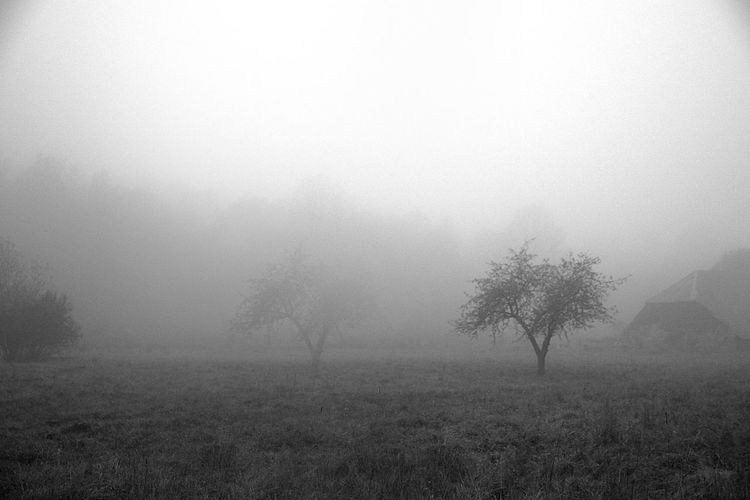 Nature Photography Foggy Morning autumn mood Fall Season Foggy Landscape Trees Rural Landscape Black And White Backgrounds Textured  Rainy Season Condensation