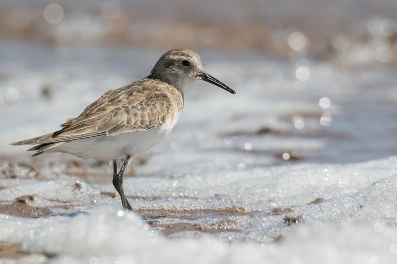 Close-up of bird perching at beach during winter