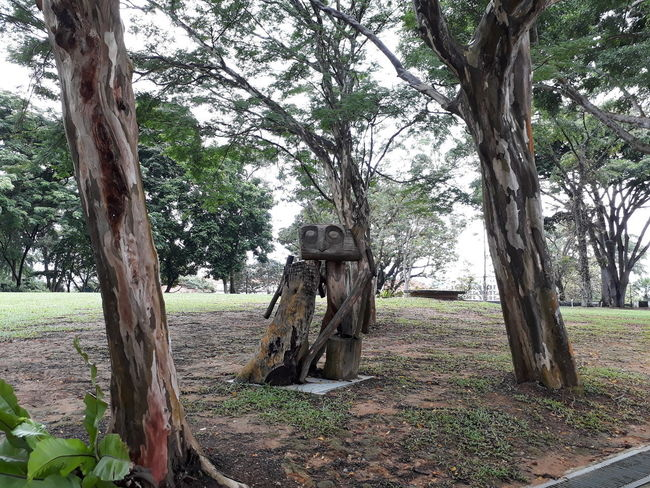 Tree's Tattoo = Fresh Air, 2018 City Life Cityscape Fort Canning Park Fresh Air Singapore Adventures In The City Day Environment Field Grass Landscape Nature Outdoors Plant Rainforest Tranquil Scene Tree Urban Wood