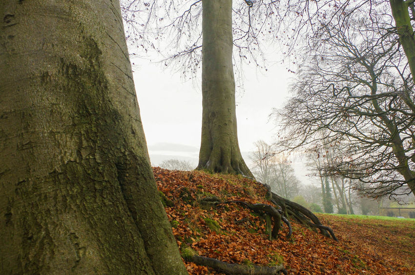 Tree Growth Nature Tree Trunk Landscape Outdoors Beauty In Nature No People Scenics Day Sky Water Close-up Misty Morning Mist Woodlands Landscapes December Winter Autumn Autumn Leaves Autumnal Tranquility Forest Branch
