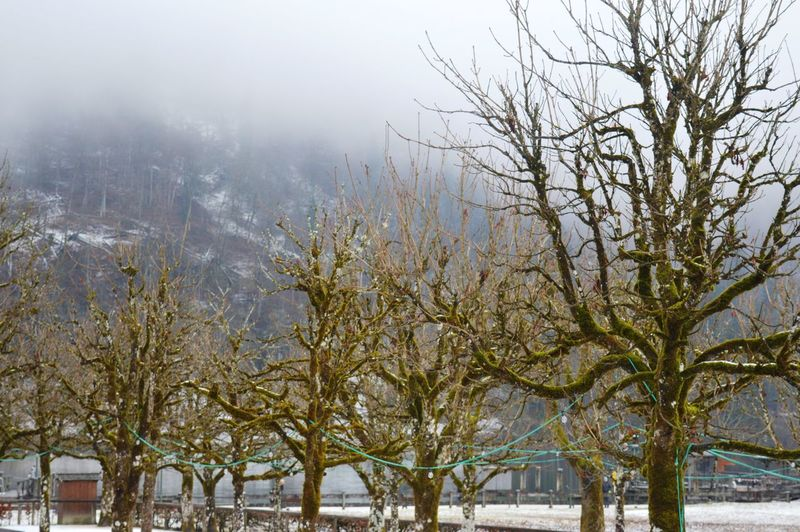 Winter Water Tree Snow Sky Outdoors No People Nature Growth Day Cold Temperature Branch